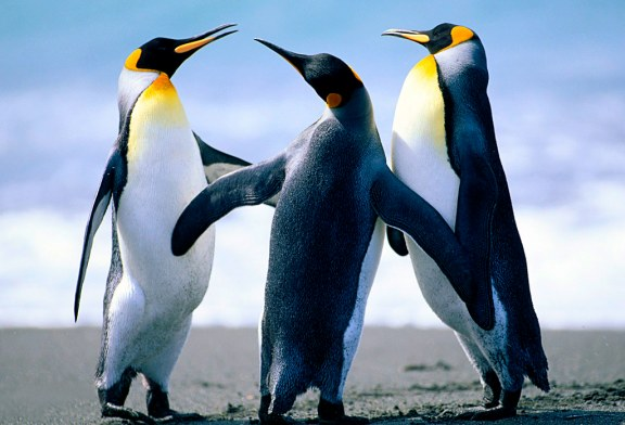 The Penguins Know